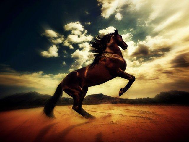 desert_horse_by_jihadprincess-d30z76v